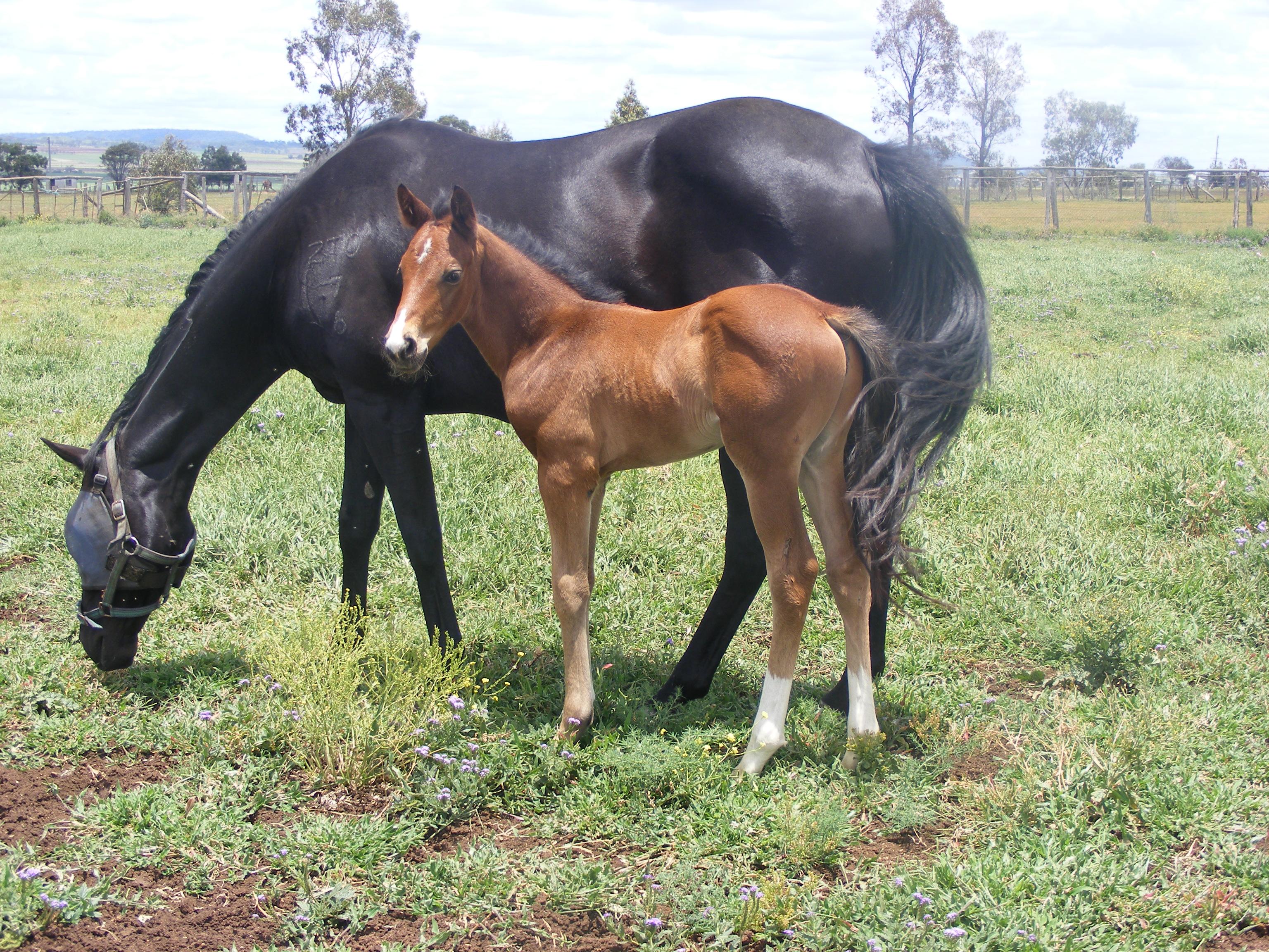foals 187