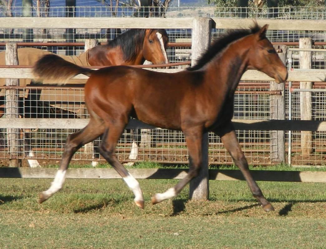 horses2008 331