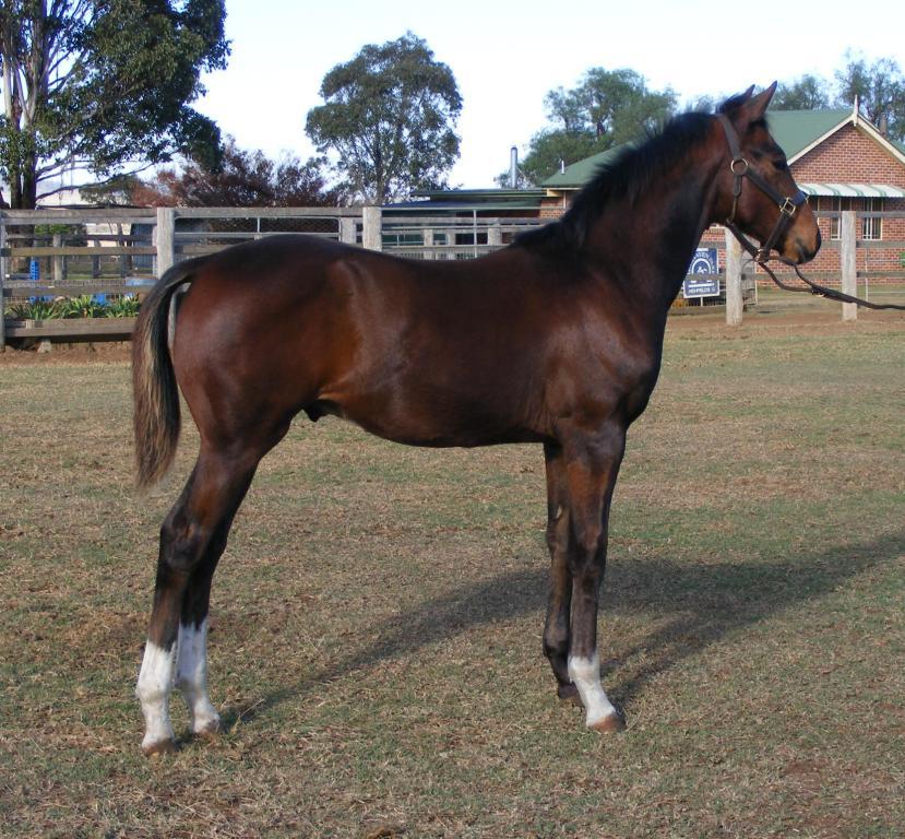 horses2008 447